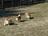 West Michigan Corgi Meet…