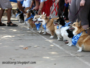 San Gabriel Valley Corgis