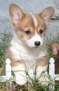 Puppy Class of 2012