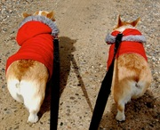 Low-Riders on Leashes