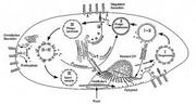 BIO201 Basic Cell Biology