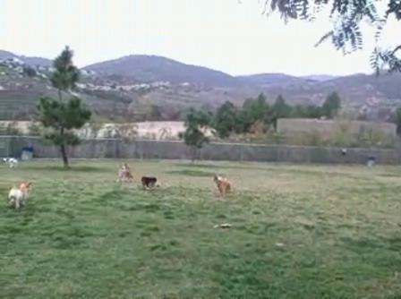 RB dog park 121408