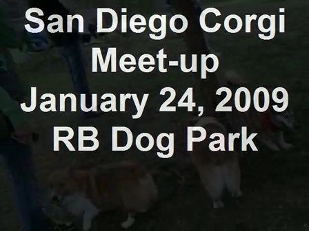 San Diego Corgi Meet-up January 24, 2009 RB Dog Park