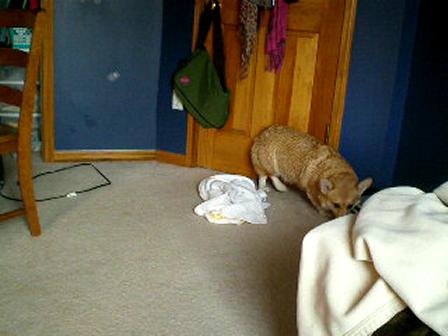 Winston after a bath!