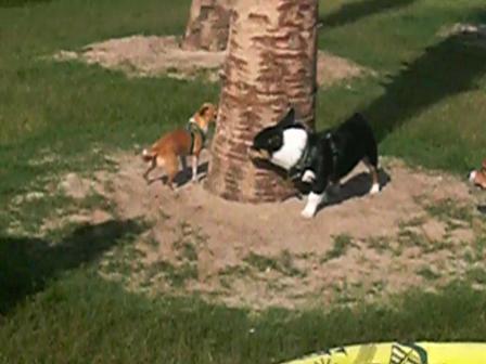 Fester, Lady, &Winsday Around The Tree