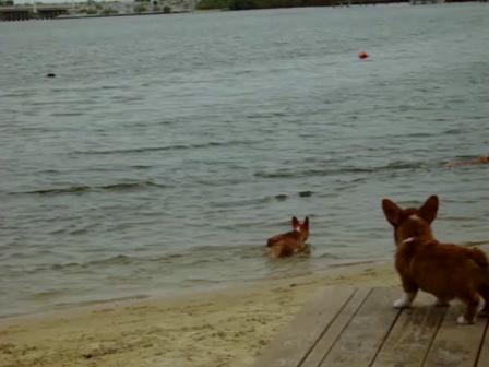 Billy swiming