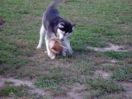 Shockoe at the dog park