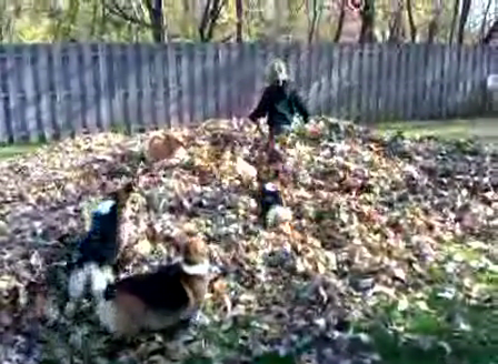 Low Riders Playing in Monster Leaf Pile