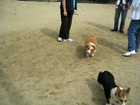 03.20.2010 Mountain View Corgi Meeting