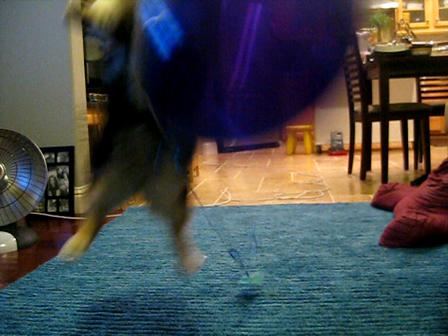 Ollie vs balloon