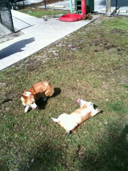 Charlie and Milo Playing