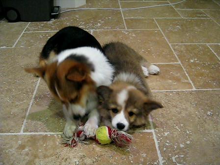 Ollie and Bear share