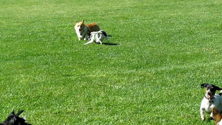 Aptos dog park May 2010