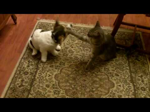 Lucy the Corgi and Gus more play