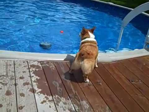 Gibson Swims