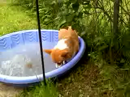 Penny in pool