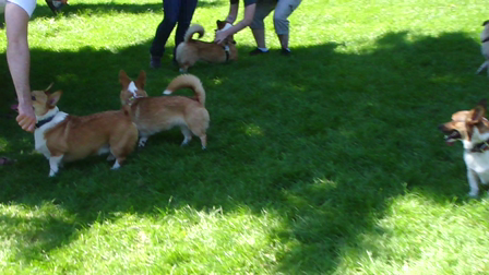 Corgi Party - first of many more to come!