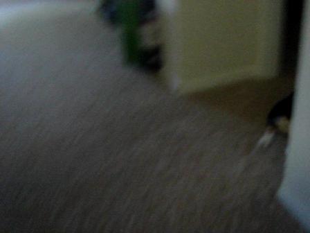 Bowser vs Roomba