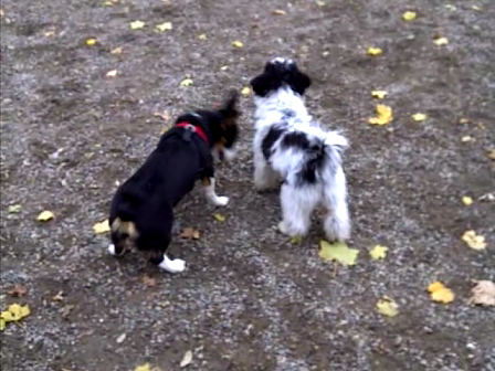 Mia and Moo - a perfect match :)