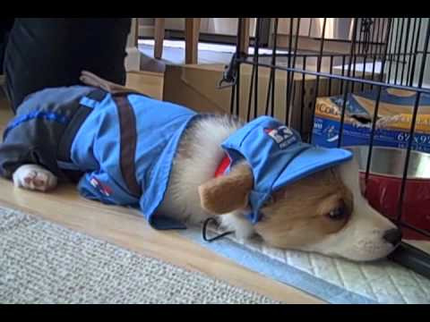 Milo the Mail Puppy