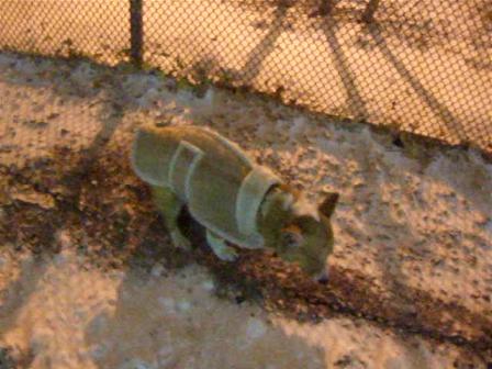 Ein in the Blizzard of 2010