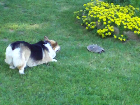 Hanna and the Turtle 6-2-11