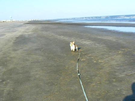 Daisy at the beach