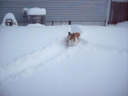 Blizzard Feb 02,2011