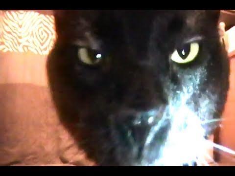 Talking Kitty Cat - Wake Up Kitty 17