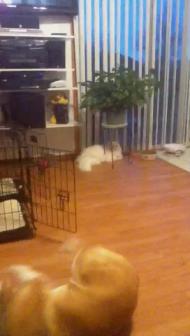 Fetch and block- Hermione fetches, Luna plays defense
