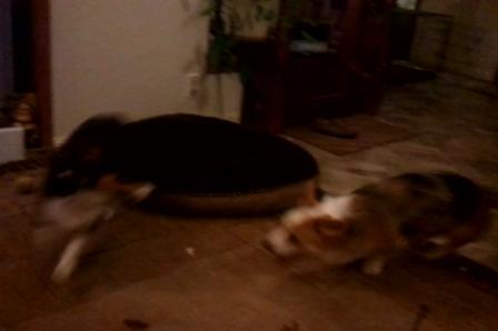 video-2012-01-13-17-34-57
