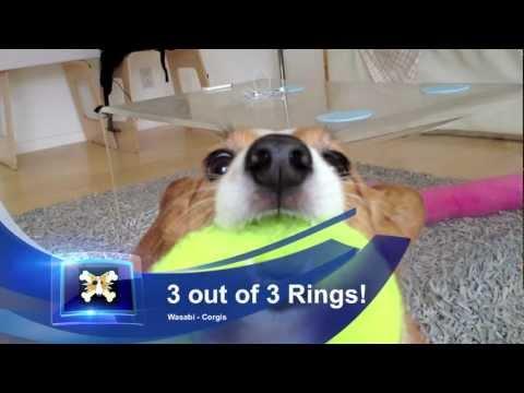 Wasabi Ring Toss