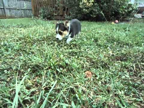 Piper Playing Outside