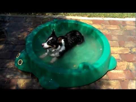 Kiba enjoying his pool