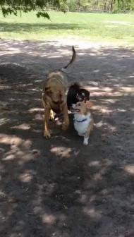 sunnybrooke dog park