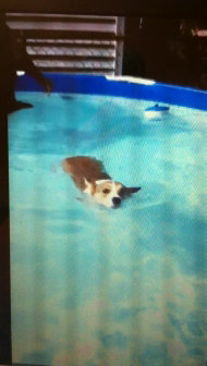 Bo swimming