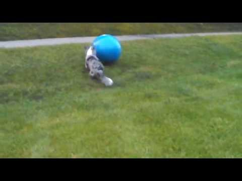 Kaylee plays with a Large Exercise Ball