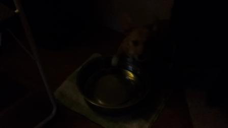 Maverick's Water Bowl Fun