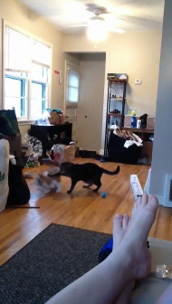 Sterling Playing with Twinky