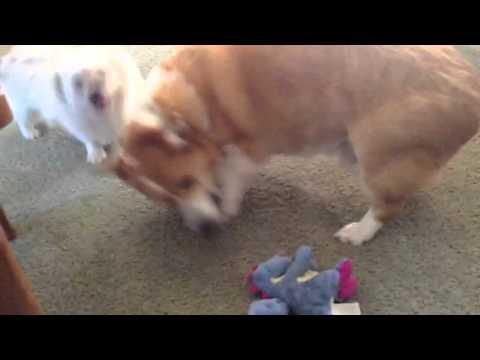 Ziggy & Sadie Playing Ruff 'n' Tuff!