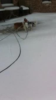 Snow Video 2014