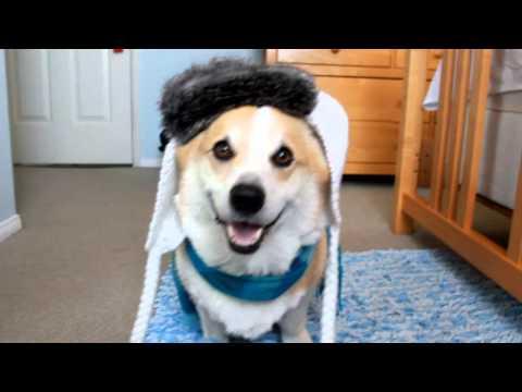 Happy Howl-een!- Corgi Dress Up Addition