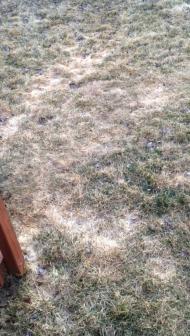 Our Corgis Running Around