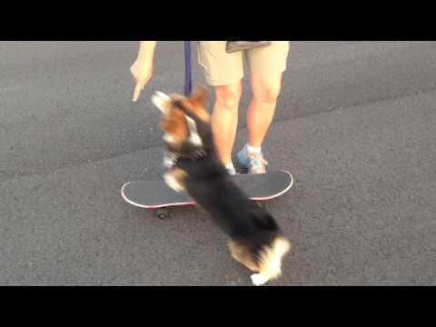 Jeli Learning to Skateboard 1