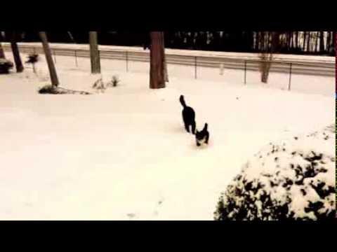 Romp in the snow