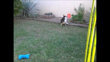 Murphy Leaps