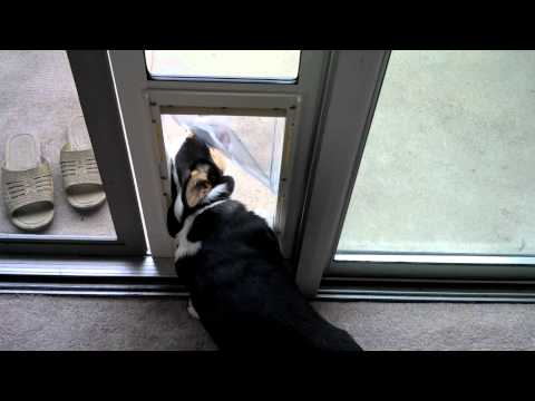 Ferris and Doggy Doors
