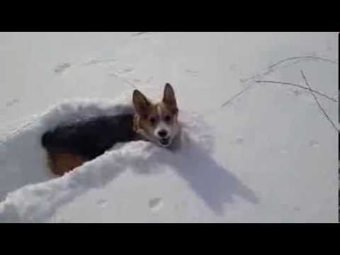 Winnie snow run