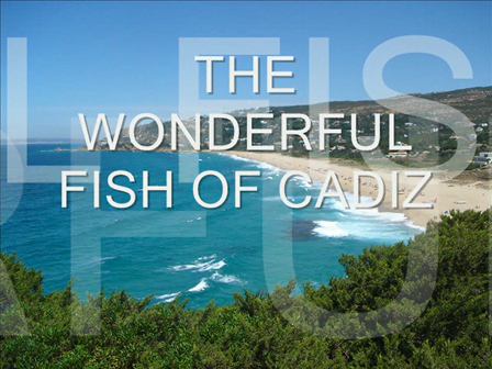 THE WONDERFUL FISH OF CADIZ