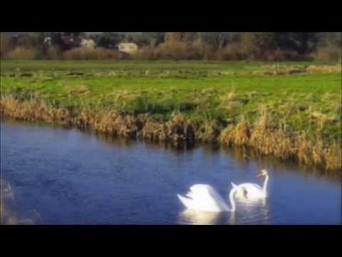 'Two Swans on the Arun' by Philippa Anne Reed-Songs from the Psaltery